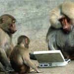 computer monkey